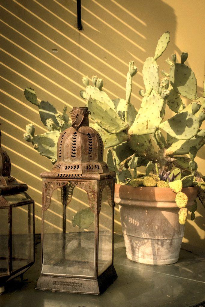 Calcinaia-cactus